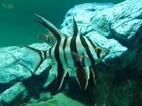 オーストラリア南部、北部、北太平洋~卵の守護者と砂に忍びし物(葛西臨海水族園) - 続々・動物園ありマス。