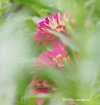 台風 - Summer PHOTO