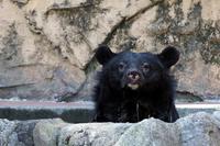 「タロコ」の水浴 - 動物園放浪記