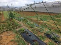 異例の逆走台風 - 週末農夫コーディーのイケてる鍬の振るい方