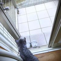 台風一過の猫テラス - にゃんず日記