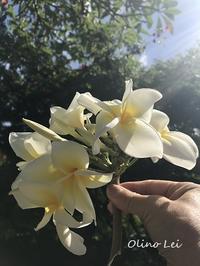 Garden Island Lei Making No.12 - 私らしく輝いて*  毎日が Ribbon Days *