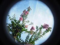 夢千夜一夜【第983夜】OLYMPUS PEN-F/Kodak Cine Ektar Lens 15mm f:2.5 - 久我山散人
