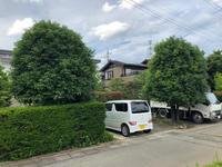 夏季剪定 - 三楽 sanraku 造園設計・施工・管理 樹木樹勢診断・治療