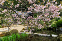 桜咲く京都2018 実光院・春の花 - 花景色-K.W.C. PhotoBlog