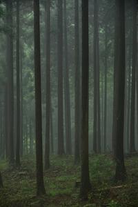 7月28日 霧の林 - 光画日記