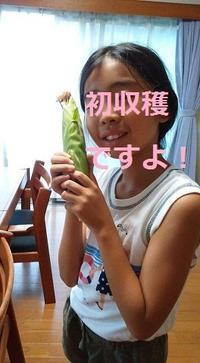 日本の種が優秀!日本の野菜は美味しい!横浜タイ料理教室 - 日本でタイメシ ときどき ***