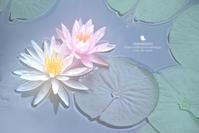 空白 - お花びより