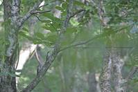 静寂の森で秘っそり静かーに! - healing-bird