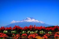 30年7月の富士(22)湖畔の夏の花と富士 - 富士への散歩道 ~撮影記~