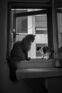 my cats2018 - おまけ猫たちとの日常