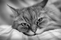 ノワの写真館 2018 - おまけ猫たちとの日常