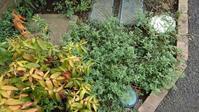 草取り - うちの庭の備忘録 green's garden