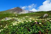 ***** 北海道登山旅行日本百名山 旭岳他ピクアップ編 ***** - 風の便り