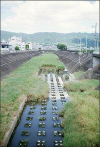 生駒山系 - のっとこ