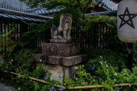 桔梗咲く清明神社 - 鏡花水月
