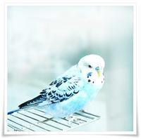青い鳥 - きのう・今日・あした