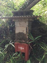2018 ニホンミツバチ採蜜。 - 雨 ときどき 晴れ