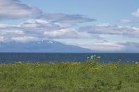 北海道の夏 ′18_野付半島にて - 彩の国 夢見人のフォト日記