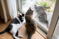 クーちゃんの近況 - 猫と夕焼け