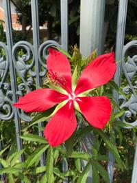 暑さ戻る、庭の花。 - piecing・針仕事と庭仕事の日々