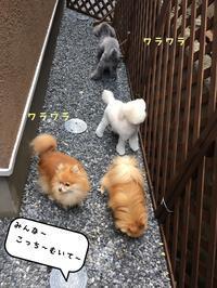 店長の日記〜お泊り〜 - トリミングサロンオリーブスタッフ日記