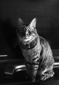 宇宙との交信!トラちゃんの8月占い - 猫丸ねずみの大荒れトーク
