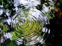 自然のパターン・・・みずすましの芸術的輪っか - 『私のデジタル写真眼』