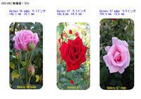 薔薇 - 写真で楽しんでます! スマホ画像!