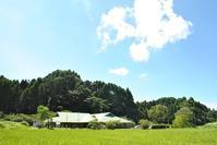 しずかさや いわにしみいる せみのこえ - 千葉県いすみ環境と文化のさとセンター