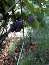 庭の収穫物 - refresh-3
