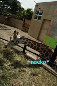 北海道旅行5 旭山動物園 - なえこ日記