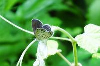 今日も蝶とか、アマガエルなど - ぶらり散歩 ~四季折々フォト日記~