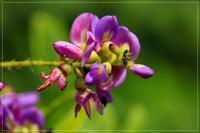 暑さに負けず元気な庭の花 - 気ままにデジカメ散歩
