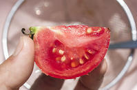 トマトの採種 - 良え畝のブログ