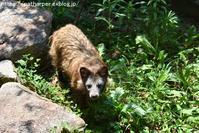 2018年7月とくしま動物園その2 - ハープの徒然草