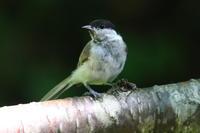 森の水場で① - 今日の鳥さんⅡ