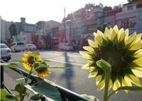 8月1日(水)定休日です。。。 - ベロエキップ便り <江東区清澄白河の自転車屋さん&ハンドメイドも好きな店>