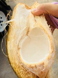 ココナッツの収穫♡ - Takako's Diary