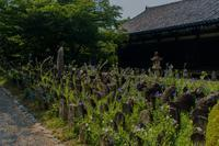 石仏に咲く桔梗~元興寺 - 鏡花水月