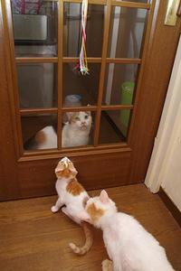 ドア越しに・・・ - ぶつぶつ独り言2(うちの猫ら2018)