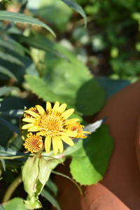 リグラリアの花から元気をもらう。 - 小さな庭 2