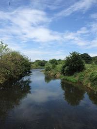 『河川環境楽園(木曽川水園・アクアトトギフ・オアシスパーク)を歩いて~』 - 自然風の自然風だより