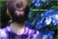 紫陽花 - 今が一番