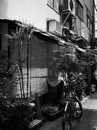 簾の季節 - 節操のない写真館