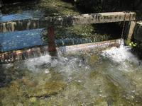 涼を感じて  梅花藻の清流 - タビノイロドリ