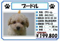 子犬の生体価格が安くなりました! - ペットケアタウン ブログ