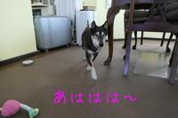 週末の朝はストーカー - HAMAsumi-Life