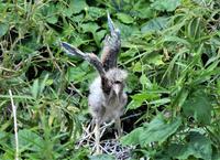 コロニーにて(ゴイサギ)第2弾 - バードカラー