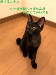 クイズだよ - 八幡地域猫を考える会